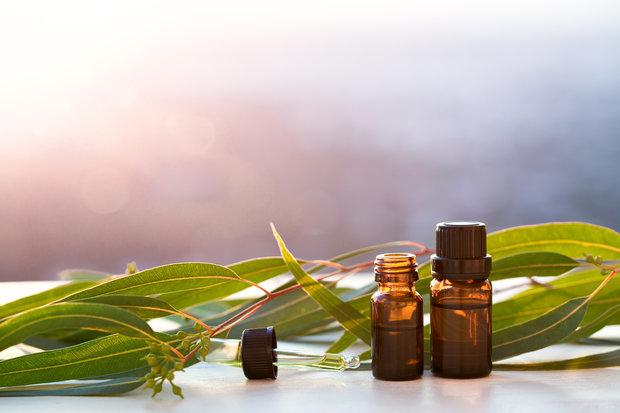 Bazalkový esenciální olej – jaké má účinky na zdraví?
