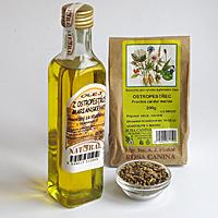 Borůvkový olej a jeho účinky na zdraví – na co je dobrý?