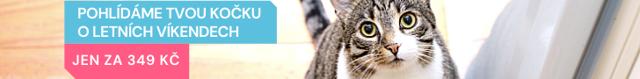 Alergie na kočky – jak na ni?