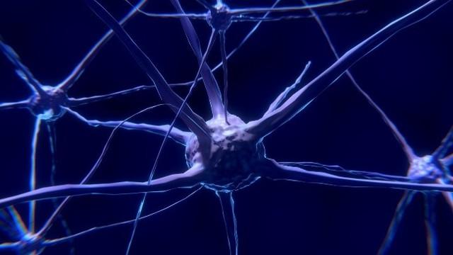 15 zajímavých a zábavných faktů o nervové soustavě