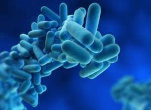 Bifidobakterie – jaké mají účinky na naše zdraví?