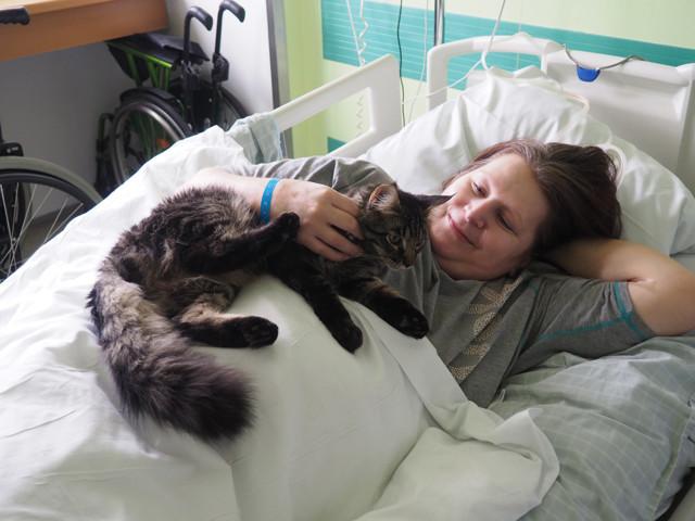 Felinoterapie
