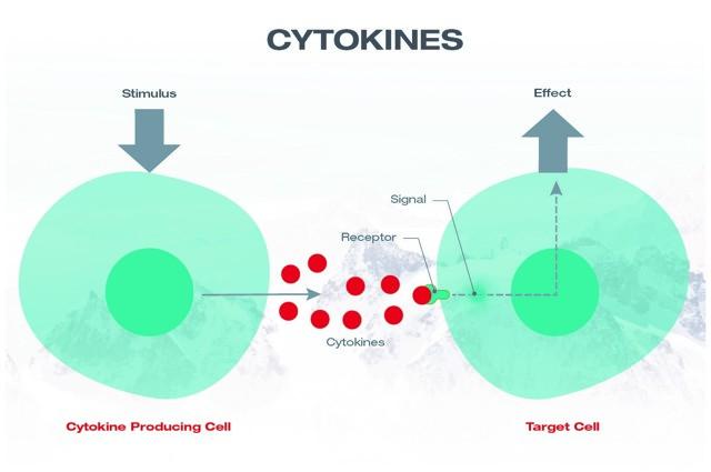 Cytokiny a zdraví – na co je potřebujeme?