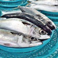 Je z pohledu zdraví vhodné jíst ryby každý den?