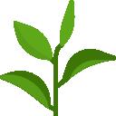 TOP 10 bylinek a rostlinek na jizvy a strie – které mohou pomoci?