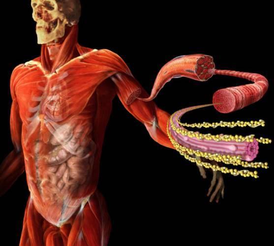 Příčiny kardiovaskulárních onemocnění – jaké jsou nejnebezpečnější a nejčastější?