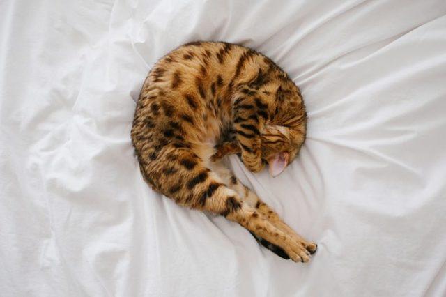 Jak rychle usnout? Jak usnout za 10 sekund, 1 nebo 2 minuty?