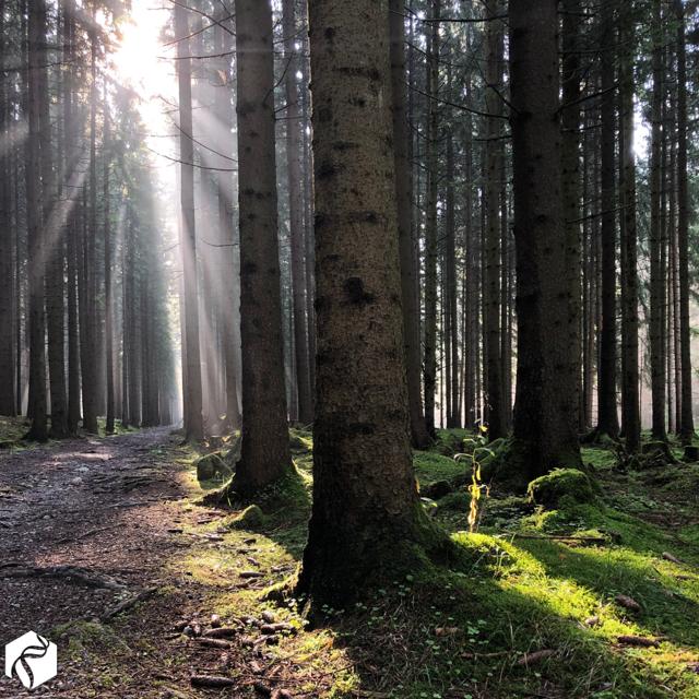 Shinrin yoku – Lesní koupel a její přínosy pro naše zdraví