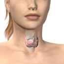 Může Ashwagandha zlepšit zdraví štítné žlázy? Je to alternativní léčba štítné žlázy?
