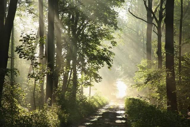 Už pouhých 20 minut kontaktu s přírodou sníží hladiny stresového hormonu