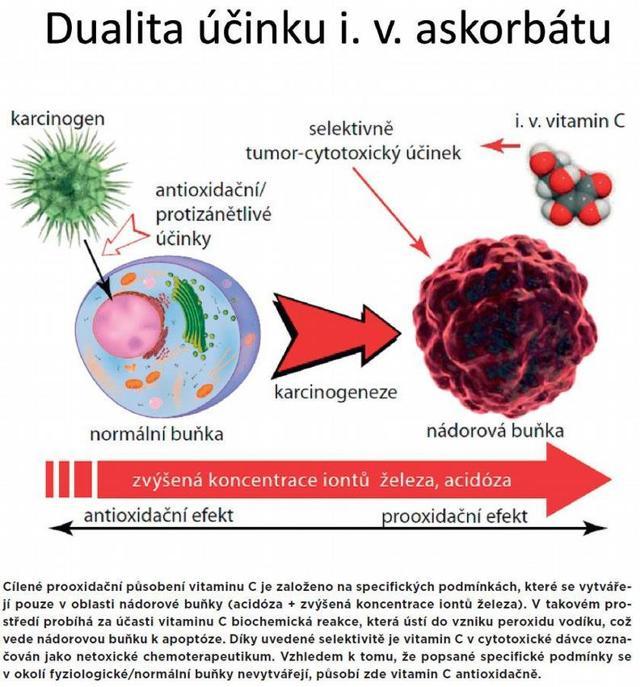 Vitamín C– různé podoby, stejný účinek
