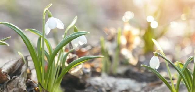 Pesto zdivokých jarních bylin