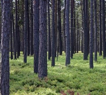 Proč by měla být lesní terapie na předpis