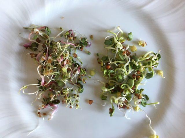 Teď je ten nejlepší čas na jarní detox sbylinkami a semínky