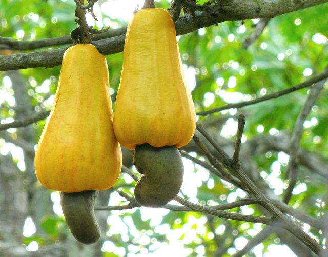 Proč nejde dražovat švestka ani drcené ořechy?