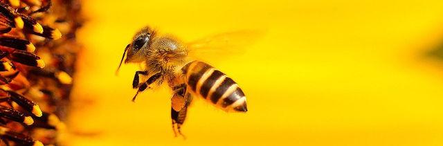 Parfém jako spouštěč alergií?