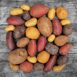 Je potřeba vrátit bramborám jejich chuť