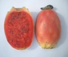 Opuncie je plod kaktusu. Pozor na trny