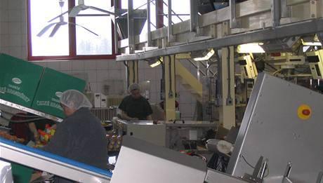 Podívejte se: Zjakých brambor se stanou české chipsy