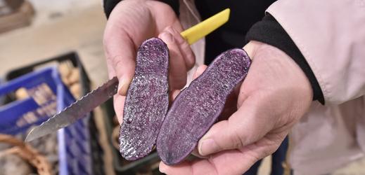 Vědci vyšlechtili zlaté brambory