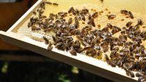 Když med, tak od včelaře