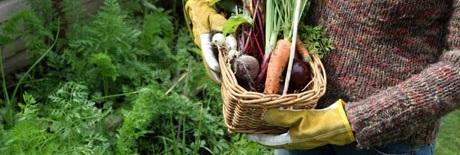 Ekofarmáři: Vracíme mrtvé půdě život a lidem zdravé jídlo