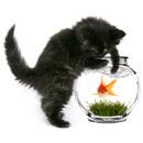 Měly by se těhotné chovatelky koček bát toxoplazmózy?
