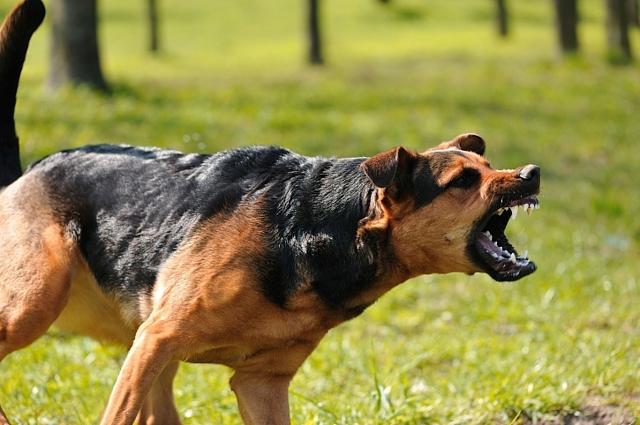 3způsoby, jak vznikne fobie ze zvířete