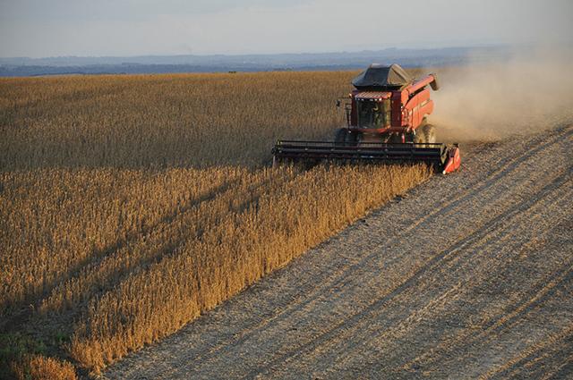 Pěstuje sóju na Hané, jde to ibez GMO