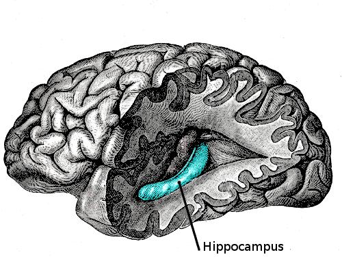 Dějiny mozku: Jak přežít sdírou vhlavě
