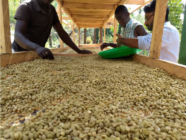 Proč jsou na některých trzích farmáři, ale jinde překupníci