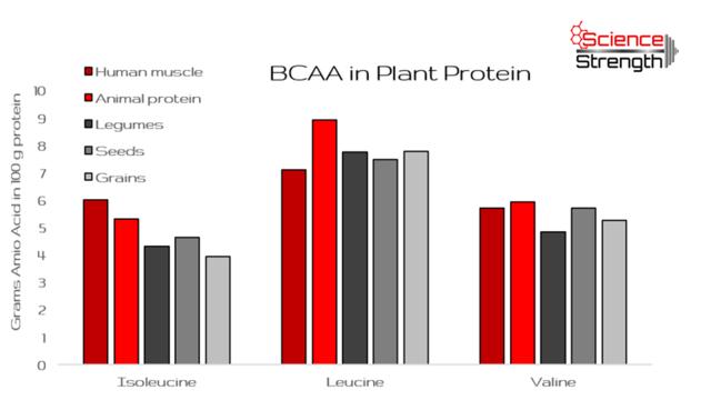 Odborníci se zaměřili na bílkoviny ve výživě: vyšší příjem proteinů vjídle neškodí, říkají