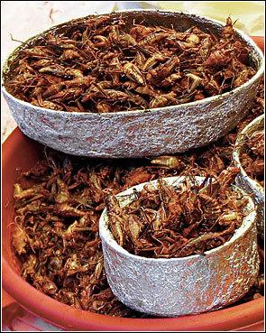 Včem je hmyz na talíři lepší než maso?