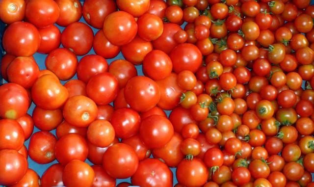 Rajčata nejlépe dozrají vsáčku sjablkem