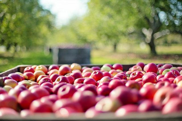 Je třeba se bát plísní v biopotravinách? Studie dokázala, že ne