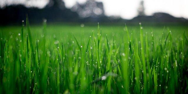 Víte, která tráva se dá jíst?