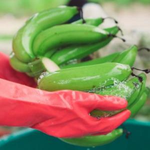 Nejdřív pesticidy, až pak zdraví lidí
