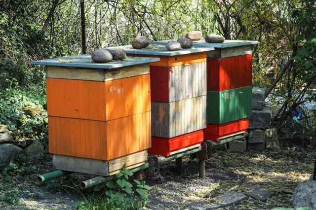 Nejlepší med na světě? ZYukatanu