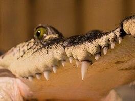 Vysokoškoláci mohou do pražské zoo v pondělí zdarma