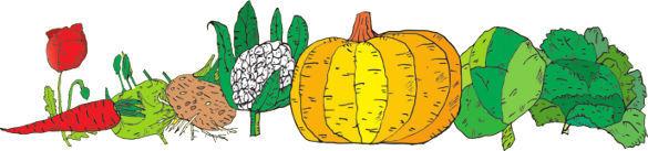 Country Life - obchod pro běžný bio nákup