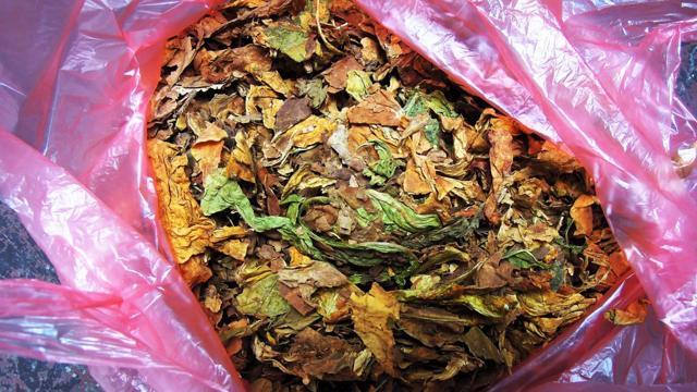 Tabák se běžně prodává i mladistvím