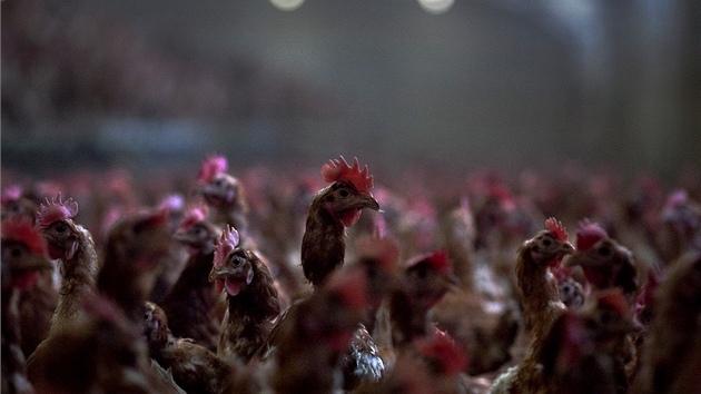 V Německu mají otrávená vejce. Važte si českých potravin, reagoval šéf Agrární komory