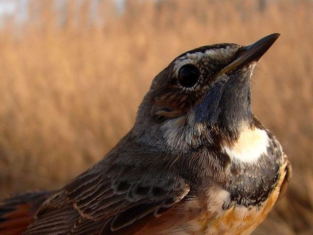 Birdwatching - lovy ptáků beze zbraní