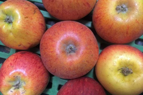 Příliš malá jablka se nesmí prodávat