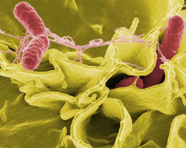 Opalování umoře může nevratně poškodit DNA