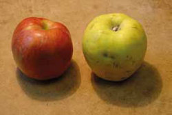 Biopotraviny jsou možná drahé, jejich logo ale nikdy nebylo zneužito