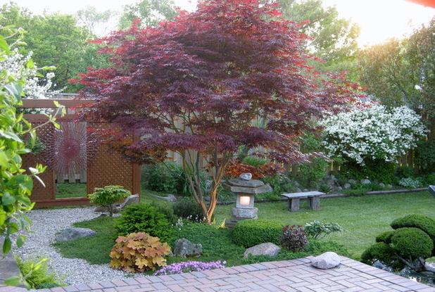 Vyberte nejkrásnější strom. Zasadíte tak další zeleň