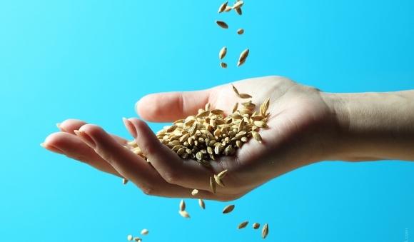 Vše, co člověk potřebuje k životu, je v jediném semínku