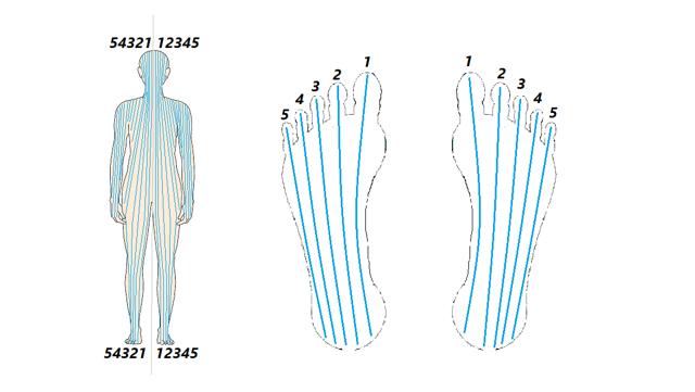 Podle reflexologie máme mapu celého těla na chodidlech