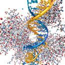Zdravé jídlo umí vypnout špatné geny